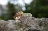 """Обручальное Кольцо """"7 камней"""""""